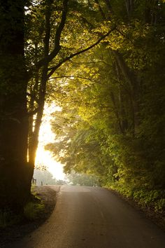 Morning light through mist illuminates a country road just after a canopy in the Cades Cove region of the Great Smoky Mountain National Park.