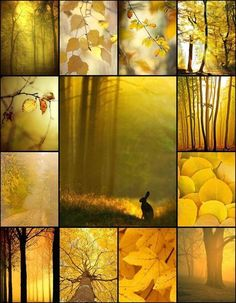 Golden Autumn mood board made by Audrey T - rabbit, trees, leaves, pumpkins Collages, Photography Collage, Color Collage, Beautiful Collage, Colour Board, Shades Of Yellow, Color Of Life, Mellow Yellow, Colour Schemes