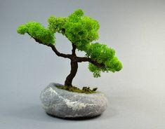 Items similar to Bonsai in felted pot pebble artificial bonsai tree with reindeer moss in felted stine unique and creative gift as home decor on Etsy Accent Colors For Gray, Green Colors, Round Gift Boxes, Felt Tree, Miniature Trees, Small Trees, Creative Gifts, Garden Inspiration, Needle Felting