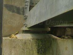 Elastomer Jembatan | Karet Elastomer | Elastomeric Bearing Pad: Elastomer Jembatan (Karet Elastomer)