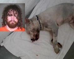Quick links to share the petition: Punish transient involved in unprovoked attack on Phoenix puppy!   Yousign.org