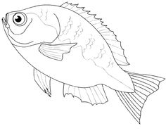 Bass Fish Realistic Coloring Pages Coloring Pages