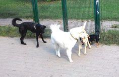 18/09/2015 - Torino con Peja, Lula e Bobby