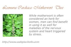 #Thee http://www.asclepius-herbs.nl