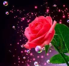 Red Rose Whatsapp Dp Images Hd Download Whatsapp Dp Images Hd Whatsapp Dp Images Whatsapp Dp