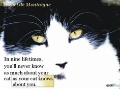 In nine lifetimes you'll never know as much about your cat as your cat knows about you. Michel De Montaigne, Classic Books, Crazy Cats, Cat Lovers, Anime, Stress, Thoughts, Reading, Quotes