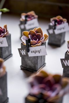 tinned goods / succulent wedding favor in a mini tin box