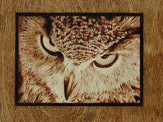 Eagle Owl Eyes Drawing