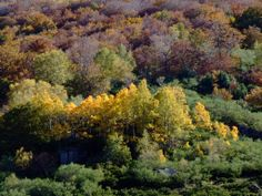 el bosque caducifolio en otoño