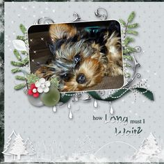Layout by Tbear. Kits: White Christmas, White Days, Berry Blessings and Traditional Christmas from December Mix and Match http://scrapbird.com/-c-83/blue-bird-mix-and-match-c-83_562/