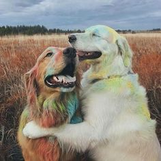 Watson and Kiko are two Golden Retriever animal friends who love paling around with a silly cat named Harry. See their adorable relationship here. Super Cute Puppies, Cute Dogs And Puppies, Baby Dogs, Doggies, Puppies Tips, Adorable Puppies, Cute Little Animals, Cute Funny Animals, Funny Dogs