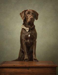 Diamond Dogs, Animal Photography, Labrador Retriever, Pets, Animals, Labrador Retrievers, Animals And Pets, Animales, Nature Photography