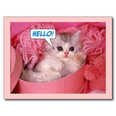 Image detail for -Pink Cat Wallpaper Cute Kitten Gif, Little Kittens, Cute Cats And Kittens, Kittens Cutest, Cute Cats And Dogs, I Love Cats, Crazy Cat Lady, Crazy Cats, Baby Animals