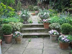 A somewhat neglected garden