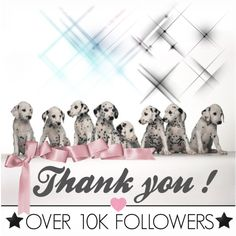 """We are so happy for our over 10k followers on #Polyvore! """"{Thank you for follow}""""! Snooty Pets is a Las Vegas pet bakery, grooming salon and boutique. Always fresh ingredients, we bake our wholesome treats in small batches daily so rest assure they will arrive to you super fresh. Order today: https://snootypets.com #DogLovers #Dogs #Puppies #DogTreats #DogGrooming #PuppyTreats"""