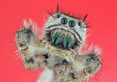 Cutest spider ever. Taken with the macro lens I want.
