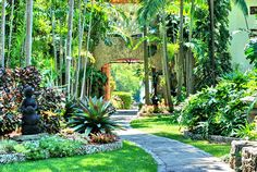 """Located on Biscayne Bay in Coconut Grove, Florida, """"The Kampong"""" is the site of the National Tropical Botanical Garden. Tropical Garden Design, Tropical Landscaping, Backyard Landscaping, Tropical Gardens, Tropical Plants, Cactus Plants, Florida Botanical Gardens, Saint Claude, Balinese Garden"""