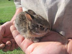 #Baby #Bunny #Rabbit
