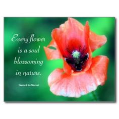 Poppy flower quotes google search poppies pinterest flowers poppy flower quotes google search mightylinksfo