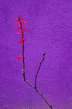 Purple   Porpora   Pourpre   Morado   Lilla   紫   Roxo   Colour   Texture   Pattern   Style   Form   wall flower