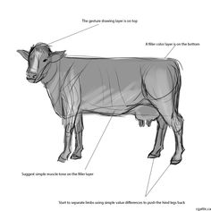 How to draw a cow step 2: create a solid object to detail the cow's skin and muscle textures. The best way to do this is to create a layer underneath your gesture sketch. Then, paint in it in, with a light color, using your digital art brush set at 100% pressure. When you have covered the areas as much as possible, combine the two layers together. You should have a solid object of your cow with the gesture lines.