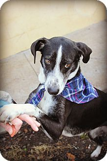 ***SUPER URGENT! 2/14/17  -TINA- I am already spayed, up to date with shots, good with kids, and good with dogs. Gentle, shy, but warms up easily. Loves to be loved.  Sylva, NC - Hound (Unknown Type) Mix. Meet Tina, a dog for adoption. http://www.adoptapet.com/pet/17414800-sylva-north-carolina-hound-unknown-type-mix