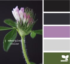 emerging color
