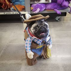 Acquire excellent ideas on pugs. They are actually accessible for you on our internet site. Black Pug Puppies, Cute Puppies, Cute Dogs, Bulldog Puppies, Pugs In Costume, Pet Costumes, Silly Dogs, Funny Dogs, Pug Dogs For Sale
