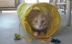 Offers some very good information as to various warning signs that your cat…