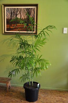 5 plantes d polluantes tendances faciles d 39 entretien pinterest plantes d polluantes - Plantes d int u00e9rieur faciles d entretien ...
