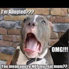 I'm adopted?...