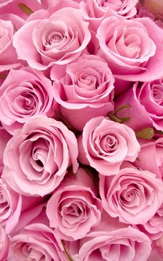 Pink flowers must be some of the most popular on planet - we have rounded up the most popular varieties of pink flowers. flowers flowers names pink flowers My Flower, Pretty Flowers, Pink Flowers, Exotic Flowers, Yellow Roses, Colorful Roses, Pink Petals, Cactus Flower, Tropical Flowers