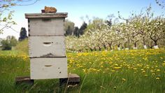 Which beehive is best? Here are 3 common designs favored by beekeepers. #bees