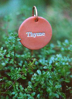 Exceptional 6 Weatherproof Garden Markers, Herb Labels, Plant Tags; Solid Brass Stakes  Incl