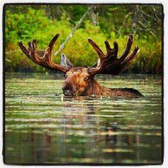 a creature emerges... // photo : Linda Bohrer Erion // #VisitAdks #Adirondacks…