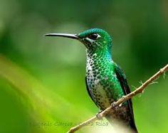 colibri - Buscar con Google Beautiful Birds, Hummingbirds, Animals, Google, Hawaii, Birds, Pictures, Glow, Animales