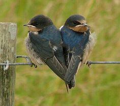 heart in nature. Pretty Birds, Love Birds, Beautiful Birds, Animals Beautiful, Cute Animals, Wild Animals, Baby Animals, Heart In Nature, Photo Animaliere