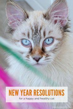 New Year's Resolutio
