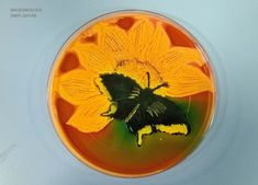 A Microbiologist Recreated 'Starry Night' With Bacteria In A Petri Dish