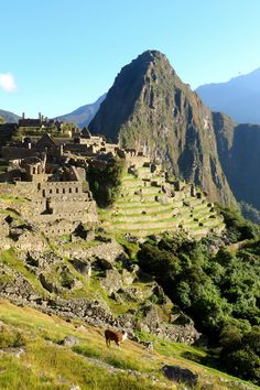 Huayna Picchu mountain towers majestically above the ruins of Machu Picchu in Peru. Also known as Wayna Picchu, the hike is considered one of the most dangerous in the world. Information on booking and tips for success with views from the trail included.