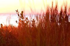 R. Mac Wheeler: Sunday Safari - Sunset on Tampa Bay