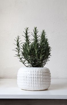 Great planter, containing the right size plant for the pot. Plants not the right shape in the right planter are just dust catchers. If you put something in your home it should be attractive, or what's the point? Biddy Craft