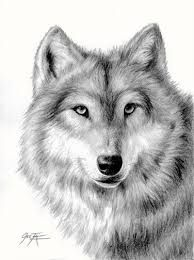wolves drawings - Google Search