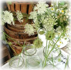 how to dry queen's anne lace via country farm home