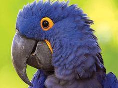 Parrots have musical tastes