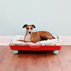 Love this DIY vintage suitcase dog bed IKEA hack for your pup. Diy Dog Bed, Diy Bed, Diy Vintage, Old Suitcases, Pet Furniture, Furniture Ideas, Animal Projects, Diy Projects, Weekend Projects