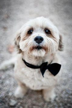 The dapper dog.