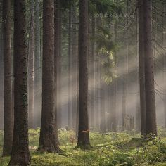 National park Šumava, Czech Republic.