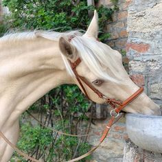 The Most Beautiful and Exotic Horse Coats in the World – palomino Akhal-Teke Most Beautiful Horses, All The Pretty Horses, Animals Beautiful, Palomino, Akhal Teke Horses, Appaloosa Horses, Perlino Horse, Palamino Horse, Andalusian Horse