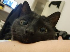 Nuka is not only a very cute cat from Finland. Nuka is the definition of a scardey cat, as his owner Essi would put it. I Love Cats, Cute Cats, Funny Cats, Old Cats, Cats And Kittens, Hover Cat, Animals And Pets, Cute Animals, Scared Cat